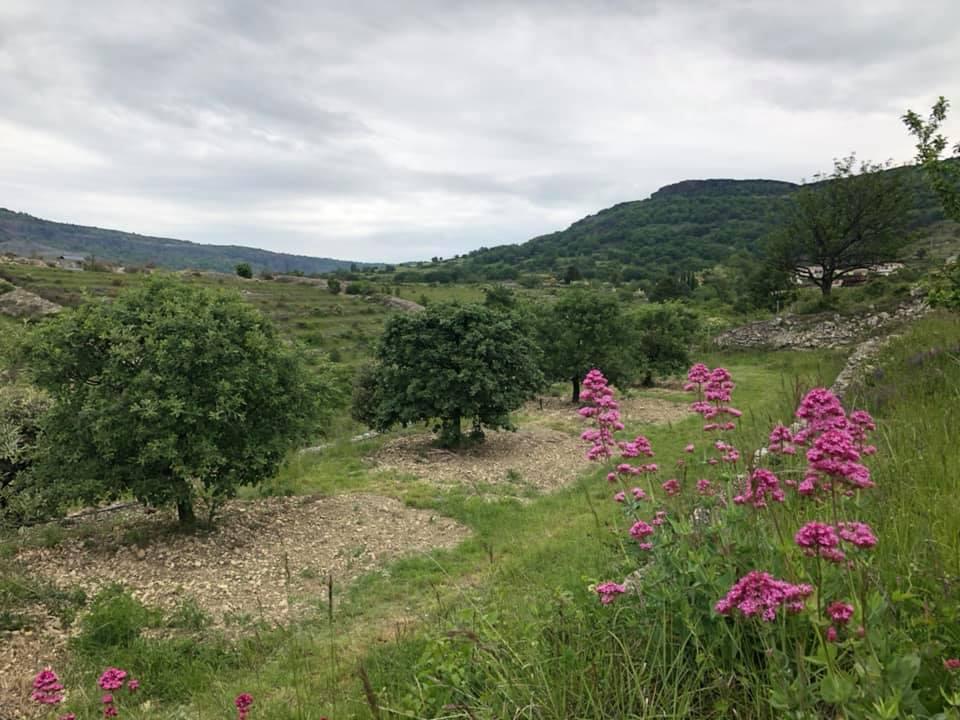 Passer de la cueillette à une professionnalisation des acteurs de la filière truffe en Ardèche