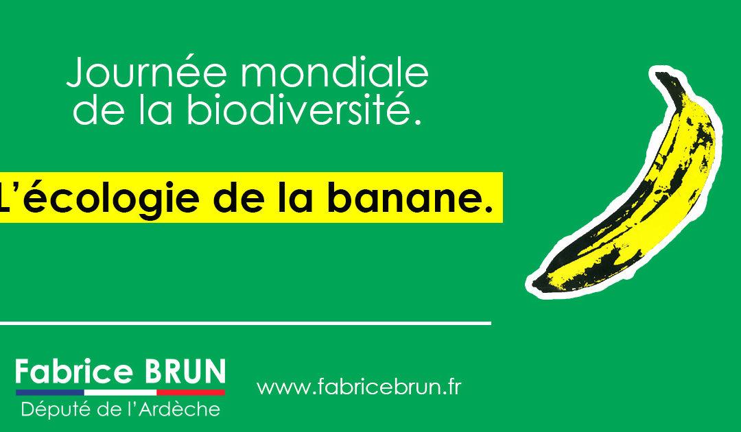 L'écologie de la banane.