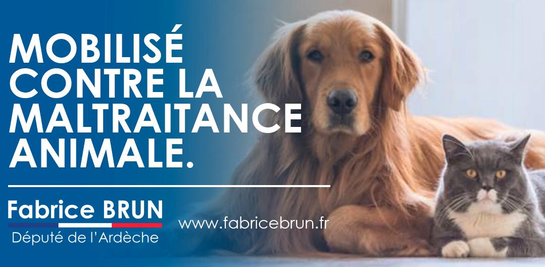 Nos propositions pour combattre l'abandon et la maltraitance des animaux domestiques.