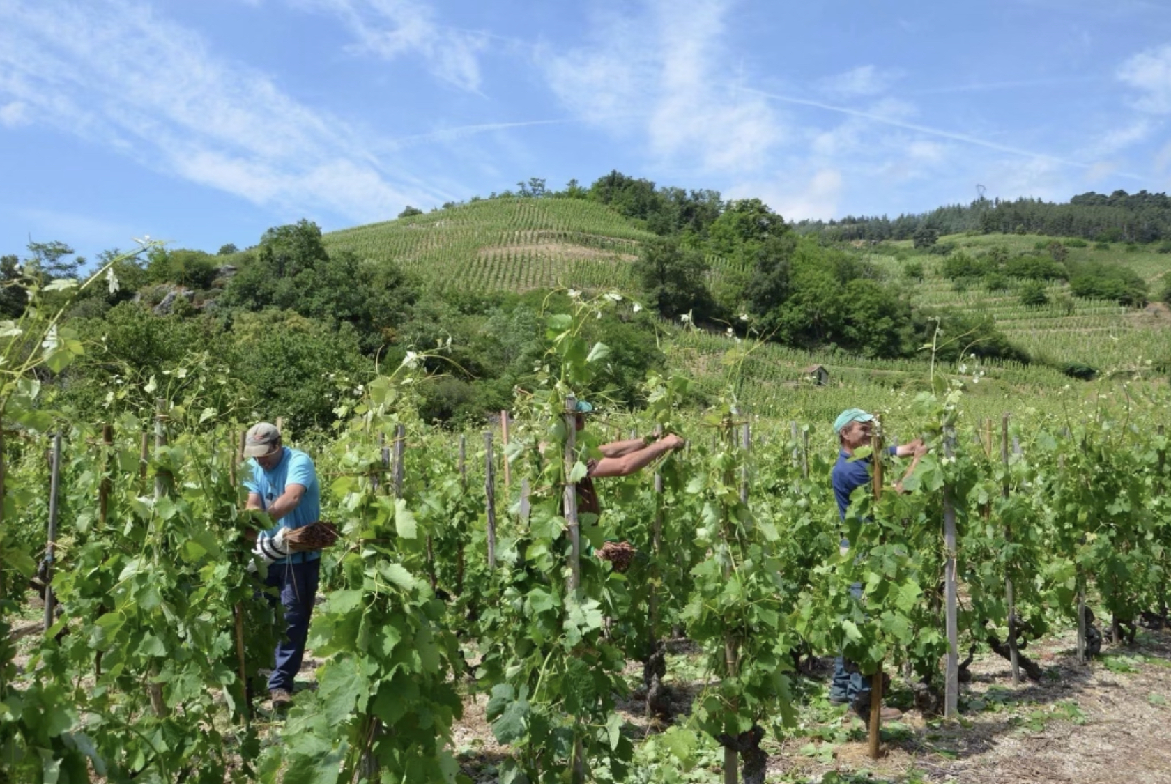 Situation de la filière viticole : je monte au créneau auprès du Président de la République