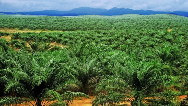 NON à l'huile de palme !