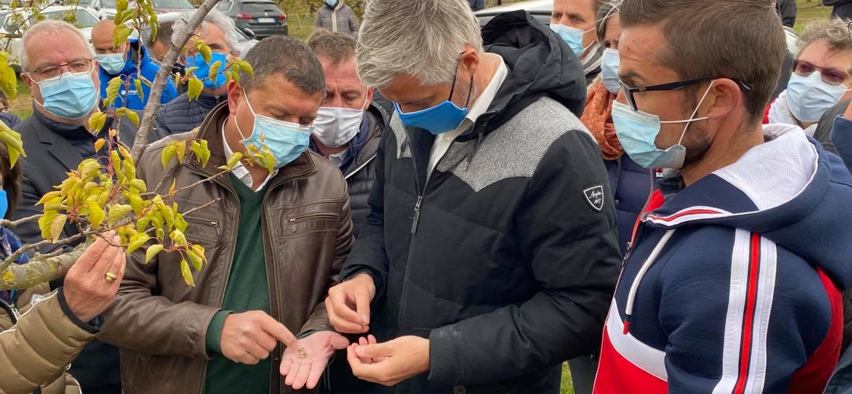 Gel : aux côtés des agriculteurs ardéchois avec Laurent Wauquiez.